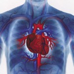 Can ED Predict Heart Disease?